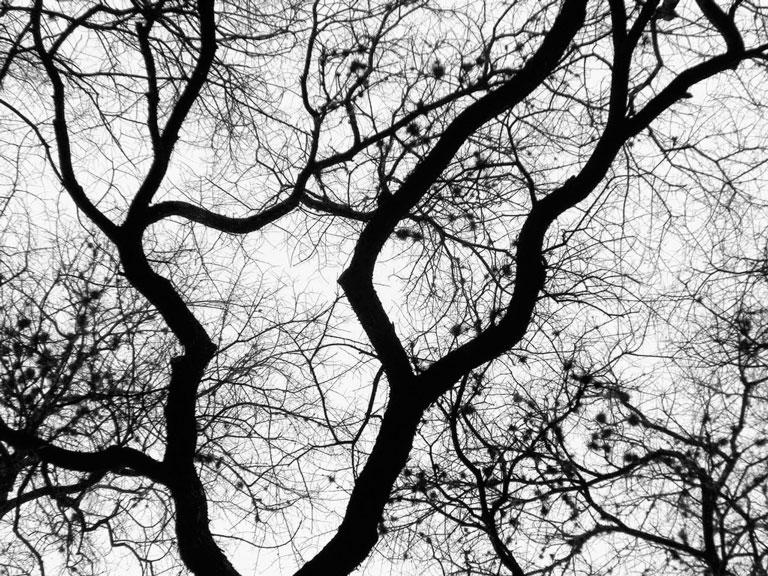 Tree Example 1